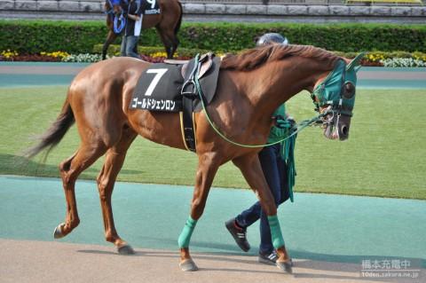 ゴールドシェンロン 2015/05/10 東京競馬場 日吉特別