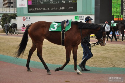 ビバナポリ 2015/01/28 川崎競馬場 ガーネットフラワー賞
