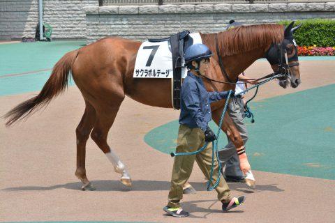 サクラボルテージ 2016/05/29 東京競馬場