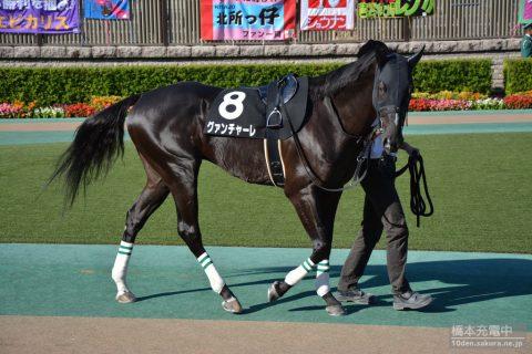 グァンチャーレ 2016/10/15 東京競馬場