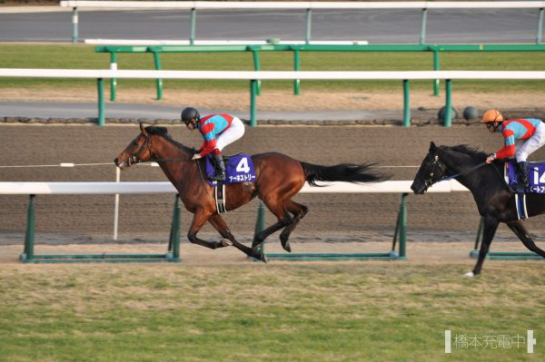 アーネストリー 2012/12/23 中山競馬場