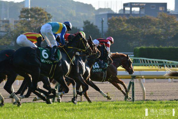 ウインゼノビア 2018/10/27 東京競馬場