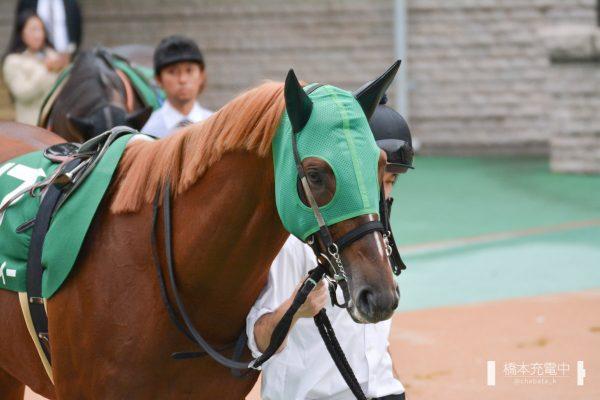 クリノガウディー 2019/10/19 東京競馬場
