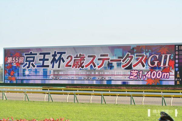 2019/11/02 東京11R 京王杯2歳ステークス